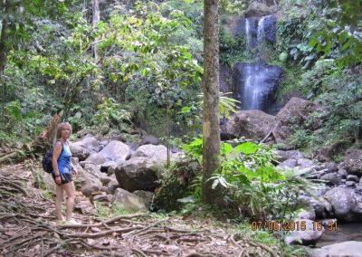 Chantal Rainforest