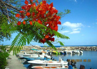 Guadeloupe Harbor